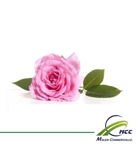 صادرات گل محمدی