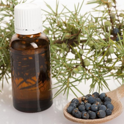 Juniper oil Export of Herb essential oil - Maleki Commercial Co.