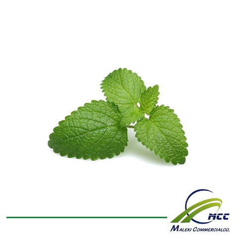 Lemon balm Export of Herb essential oil - Maleki Commercial Co.