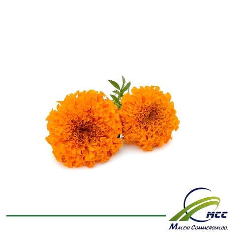 صادرات گل همیشه بهار