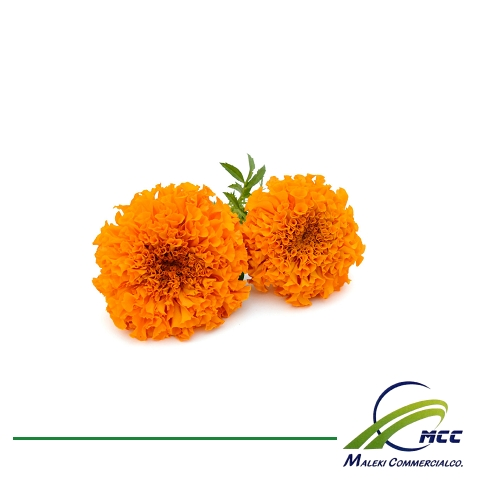 Marigold Export of Herb essential oil - Maleki Commercial Co.
