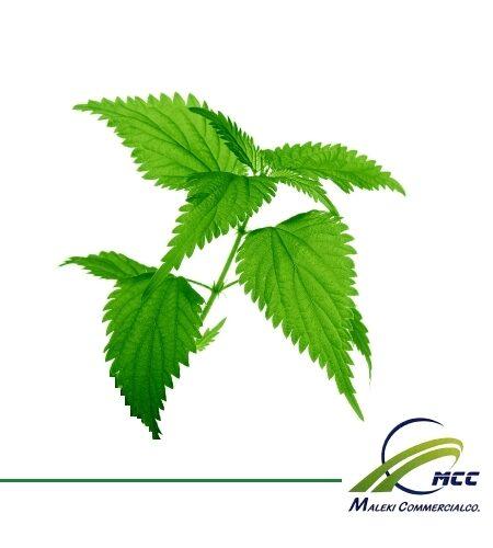 Nettle Export of Herb essential oil - Maleki Commercial Co.