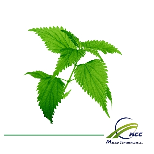 Nettle Export of Herb essential oil - Maleki Commercial Co.