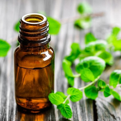 Peppermint Oil Export of Herb essential oil - Maleki Commercial Co.