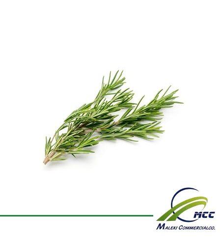Rosemary Export of Herb essential oil - Maleki Commercial Co.