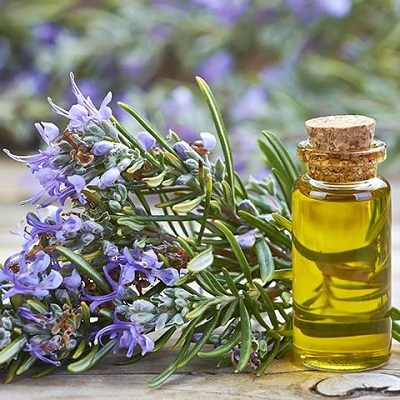 Rosemary oil Export of Herb essential oil - Maleki Commercial Co.