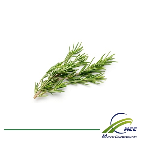 Rosemary Export of Herb essential oil - Maleki Commercial Co.