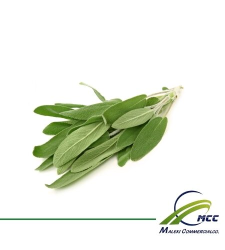Sage Export of Herb essential oil - Maleki Commercial Co.
