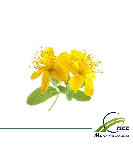 صادرات گل راعی