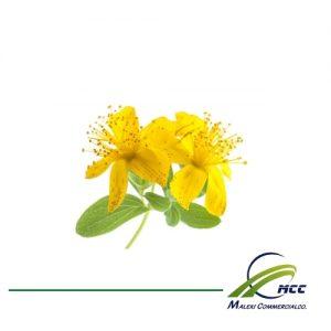 St. John's Wort Export of Herb essential oil - Maleki Commercial Co.