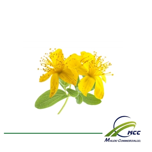 St. John's Wort Export of Herb essential oil - Maleki Commercial Co.