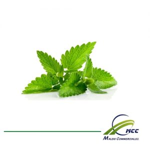 Stevia Export of Herb essential oil - Maleki Commercial Co.