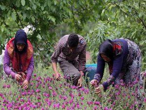 انواع گل گاوزبان