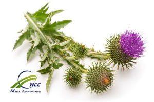 تاثیر گیاهان دارویی بر لاغری